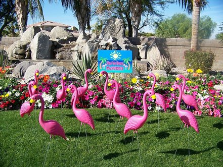 Flock of pink flamingo lawn ornaments